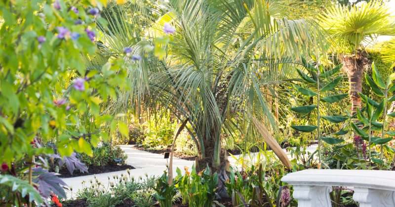 Hardy tropical garden plants