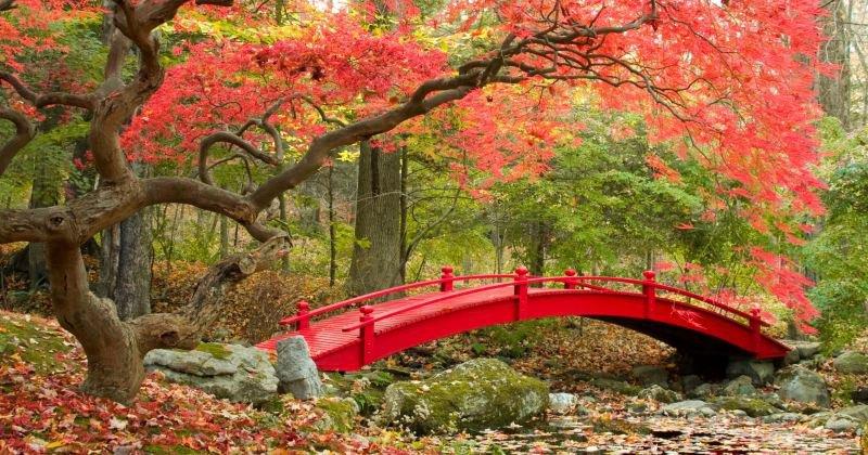 Japanese zen garden bridge