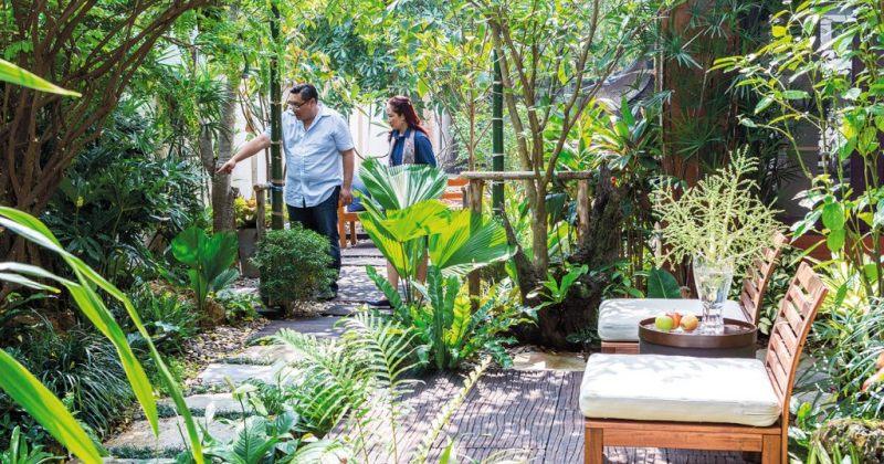 Large tropical garden plants
