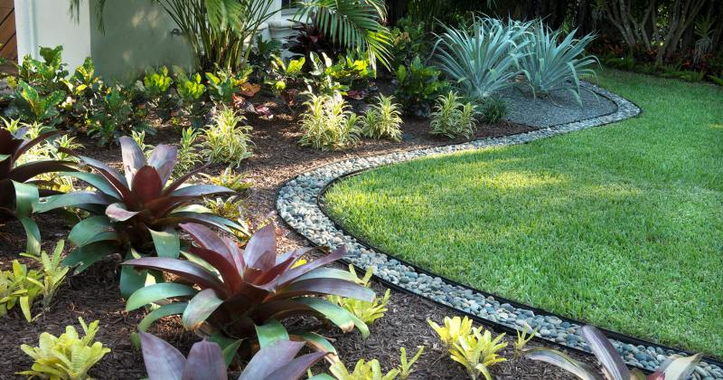 Low maintenance tropical garden plants