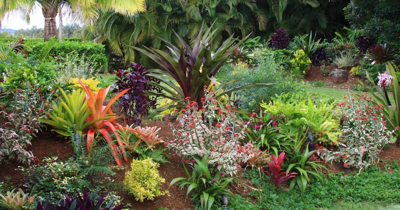 Tropical garden plants list