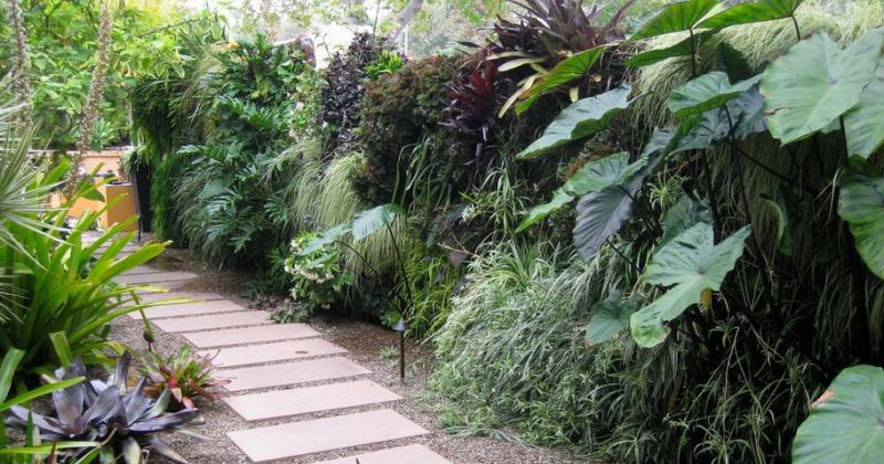 Tropical plants for the garden