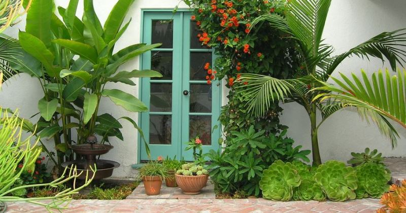 Tropical plants outdoor garden