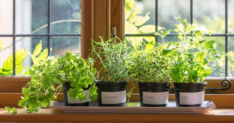 Ideas for Small kitchen garden