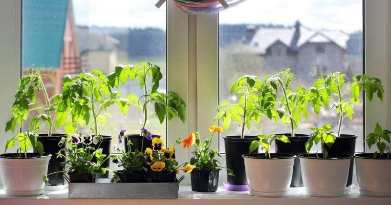 Images of Small kitchen garden