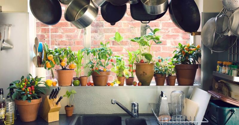 Kitchen garden Small space