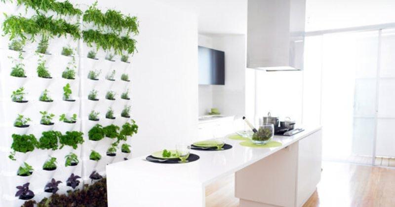 Kitchen garden in Small space