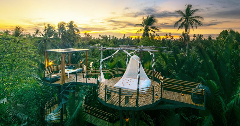 Luxury tree house resort