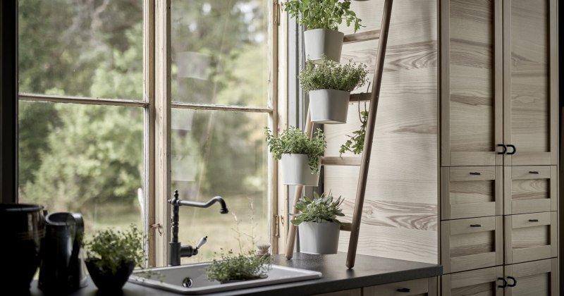 Small indoor kitchen garden