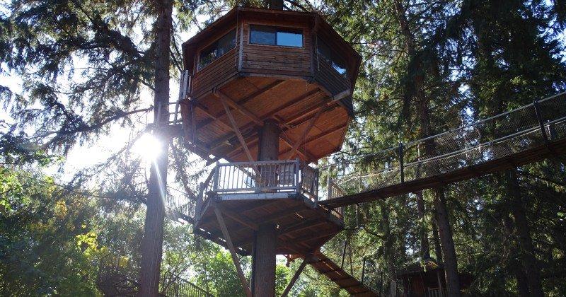 Tree house addition ideas