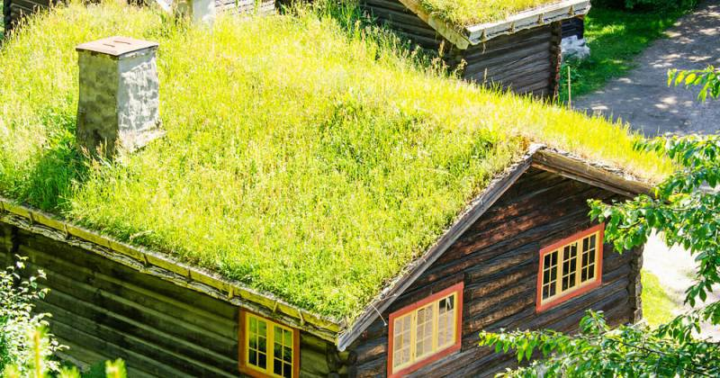 Ecofriendly Green Roof