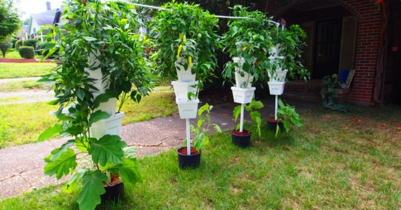 Cool hydroponic ideas