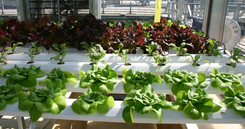 Hydroponic experiment ideas