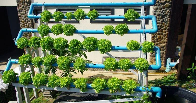 Hydroponic garden plans