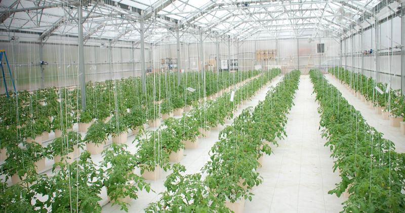 Hydroponic greenhouse plans