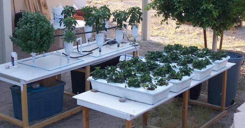 Hydroponic plans for beginners