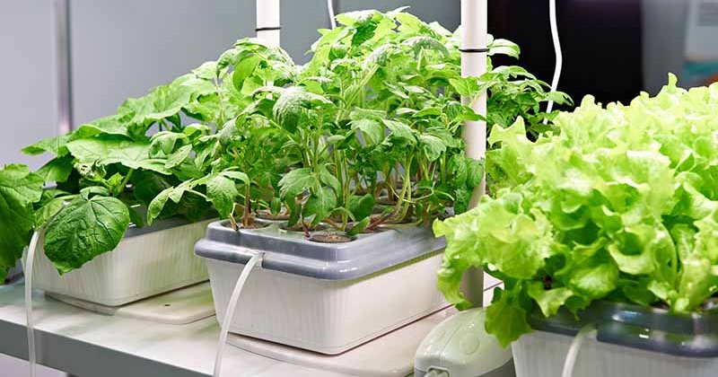 Hydroponic plans instructions